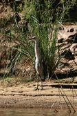 Aves - ormiston gorge, australia — Foto de Stock