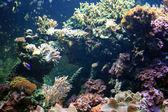 Coral Reef - Vancouver Aquarium, Vancouver, Canada — Stock Photo