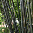 Stock Photo: Bamboo - Sun Yat Set Chinese Garden, Vancouver, BC, Canada