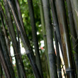 Bamboo - Sun Yat Set Chinese Garden, Vancouver, BC, Canada — Stock Photo
