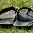 Flip Flops at Vancouver Zoo, Canada — Stock Photo