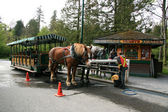 Horse Drawn Tours - Stanley Park, Canada — Stock Photo
