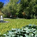 Beacon Hill Park, Victoria, BC, Canada — Stock Photo