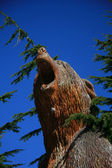 Bear Statue - Grouse Mountain, Vancouver, BC, Canada — Stock Photo