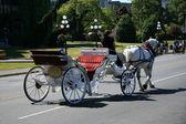 Caballo y carro - victoria, bc, canadá — Foto de Stock