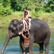 Elephant - Chitwan NP , Nepal - Stock Photo