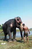 Elephant - Chitwan NP , Nepal — Stock Photo