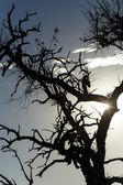 Parc safari etosha en namibie — Photo
