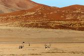 Oryx in Sossusvlei, Namibia — Stock Photo