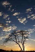 Etosha safaripark in namibië — Stockfoto