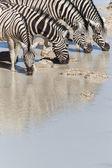 Zebra at Waterhole - Etosha, Namibia — Stock Photo