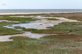 Ramsar Area - Walvis Bay — Stock Photo