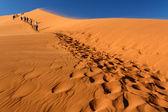 Sand Dune No. 45 at Sossusvlei, Namibia — Stock Photo