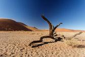 Dead Tree at Sossusvlei, Namibia — Stock Photo