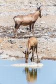 Etosha Safari Park in Namibia — Stock Photo