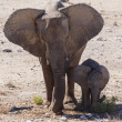 Young Elephant - Etosha Safari Park in Namibia — Stock Photo #46689097