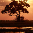 Sunset - Chobe N.P. Botswana, Africa — Stock Photo #47422767
