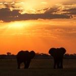 Sunset - Chobe N.P. Botswana, Africa — Stock Photo #47422771