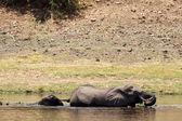 Chobe River, Botswana, Africa — Stock fotografie