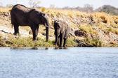 Elephant - Chobe River, Botswana, Africa — Stock Photo