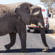Elephant - Etosha Safari Park in Namibia — Stock Photo #48163689