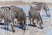 Zebra at Waterhole - Etosha, Namibia — Stock Photo