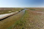 Ramsar Area - Walvis Bay — Stockfoto