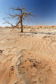 Dead Tree at Sossusvlei, Namibia — Stock Photo