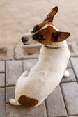 Dog in Katima Mulio — Stock Photo