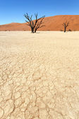Dead Vlei at Sossusvlei — Foto Stock