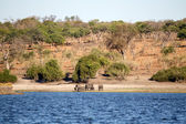 Elephants at Chobe River — Stock Photo