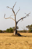 Chobe National Park — Stock Photo