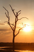 Sunset Over Chobe National Park — Stock Photo