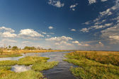 Okavango Delta — Stock Photo