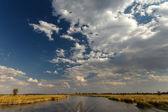 Okavango delta — Stock fotografie