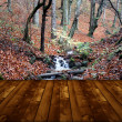 Royalty-Free Stock Photo: Wallpaper representing  wild forest and wooden floor
