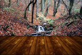 Wallpaper representing wild forest and wooden floor — Stock Photo