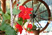 红色花朵,购物车车轮在背景中 — 图库照片