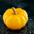 Mini Pumpkin - Stock Photo