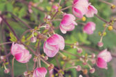 Japanese Anemone — Stock Photo