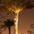 The palm tree — Stock Photo #25188885