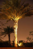 The palm tree — Stock Photo