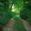 Stock Photo: Curved path in the green forest
