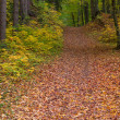 Stock Photo: Path through autumn forest