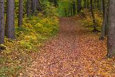 Path through autumn forest — Stock Photo