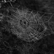 Spiderweb — Stock Photo #39828531