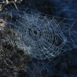 Spiderweb — Stock Photo #39828797
