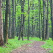 Stock Photo: Path in the green forest