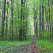 Path in the green forest — Stock Photo