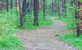 Path through spring green forest — Stock Photo